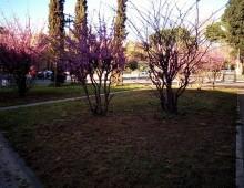 Parco delle Mura Latine, pulizie di primavera