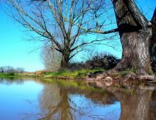 Il laghetto della Caffarella