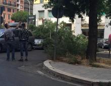 Furio Camillo: caduto grosso ramo, auto danneggiate
