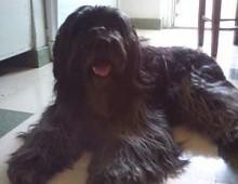 Ritrovato Waus, il cane rubato a San Giovanni