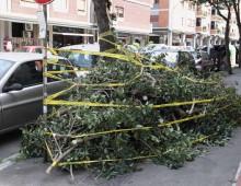 Furio Camillo: altro albero caduto, 2 donne ferite
