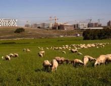 ANALISI / Consumo di suolo, è ora di dire basta