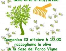 Caffarella: bimbi a raccolta delle olive