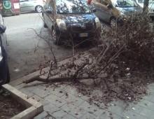 Problema alberi: risponde il VII Municipio