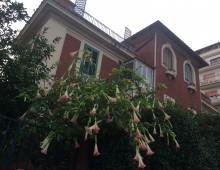 Villa Fiorelli, i fiori colorano via Portoferraio…