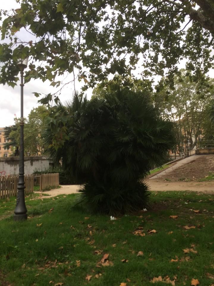 Vittorio_Alberi03