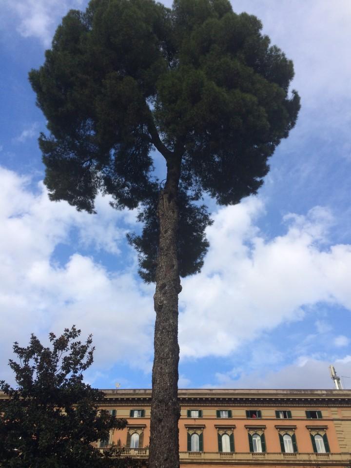 Vittorio_Alberi07