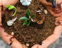 ANALISI / L'importanza della biodiversità (anche urbana)