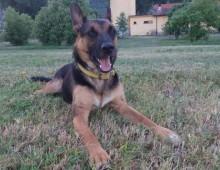 Piazza Vittorio, flash mob per il cane Ziggy, morto di overdose