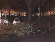 Maltempo, allagamenti e alberi caduti