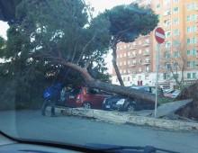 Piazza Zama: il vento forte fa crollare un albero su diverse auto