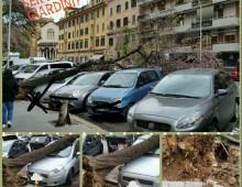 Via Aosta: crolla albero su alcune auto parcheggiate