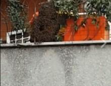Largo Colli Albani: alveare gigante sul balcone