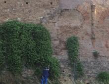 Capperi, che Mura (Aureliane) !