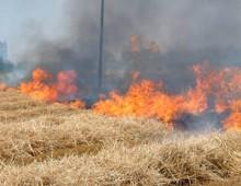 Appio: incendio di sterpaglie,  bloccata la linea ferroviaria
