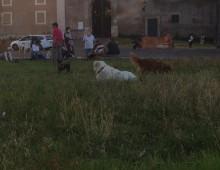 Cani, allarme bocconi avvelenati a Villa Fiorelli e Re di Roma