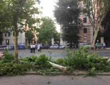 Albero caduto in via Carlo Felice: traffico in tilt