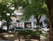 Piazza Imola: crolla un grosso ramo