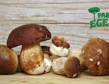 Parco Egeria: sagra del fungo