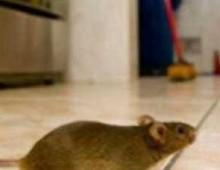 """Via Ughelli: chiuso il  nido """"Girotondo"""" per presenza di topi"""