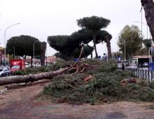 Via Appia Nuova: la strage di pini