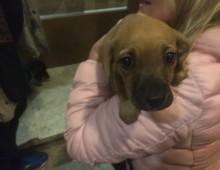 Il cane abbandonato a piazza Asti perché malato: vergogna !