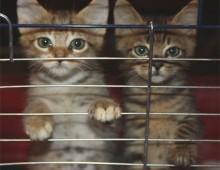 Animali segregati: caso denunciato all'Appio-Latino