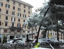Chiuso un tratto di  via Appia Nuova per caduta alberi