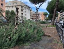 Radici danneggiate, addio ai pini: altri tagli previsti tra Re di Roma e Ponte Lungo