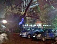 Via Appia: altro albero caduto su auto e moto