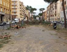 La strage degli alberi secolari su via Appia Nuova