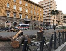 La strage di alberi su via Appia. Ci sarà ripiantumazione?