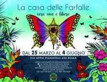 Successo per la Casa delle farfalle all'Appia Pignatelli