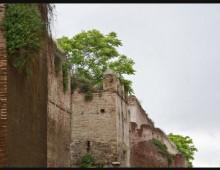 Mura Aureliane: l'invasione di piante e arbusti