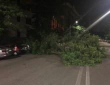 Via Taranto: albero cade su due auto
