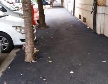"""Via Terni: Alberi sui marciapiedi """"strangolati"""" dall'asfalto"""