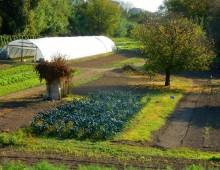 Parco Appia Antica: Orti e piante spontanee – Speciale Trentennale