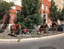 """Via Albalonga: """"parcheggiati"""" tre cavalli, fortunatamente non in seconda fila"""