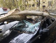 Maltempo, altro albero caduto in via Satrico e oggi scuole chiuse