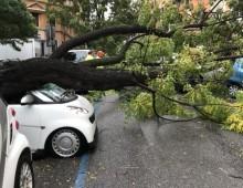La strage di alberi a Roma, e anche oggi scuole chiuse