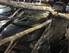 Via Pannonia: crolla albero su auto