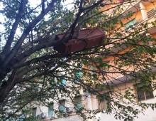 Maltempo: alberi caduti, ma anche raccogli-oggetti