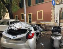 Viale Manzoni: ennesimo crollo di un albero