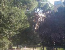 Villa Fiorelli chiusa da una settimana, oggi i lavori per la messa in sicurezza