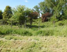 Parco della Caffarella: di nuovo la rete tagliata e il rischio bracconieri