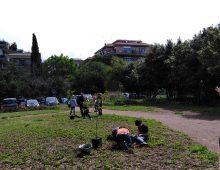 Nuovi alberi in Caffarella
