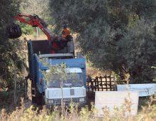 Caffarella: i volontari ripuliscono l'Almone