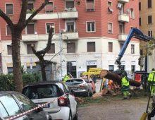 Appio Latino: di nuovo emergenza alberi