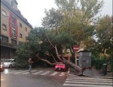 Crolla albero in Piazza Ragusa e schiaccia tre auto