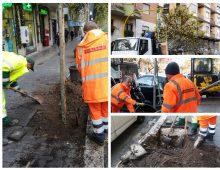 Ree Tree: 30 nuovi alberi piantati in via Gallia